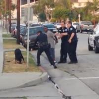 La vidéo choquante d'un chien abattu par un policier américain crée l'émoi sur YouTube