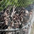 The Walking Dead saison 4 : les zombies débarquent