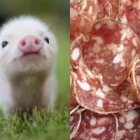 Bons et mignons : le Tumblr des bébés animaux tellement mignons qu'on en mangerait....
