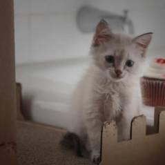 Girls : des chatons parodient Lena Dunham avant la saison 3