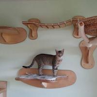 [INSOLITE] Voici l'aire de jeu la plus dingue que vous puissiez offrir à votre chat
