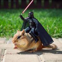 [PHOTOS] Un écureuil au casting de Star Wars : les photos qui le prouvent