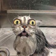 [FUN] La preuve que les chats détestent les bains en 10 photos