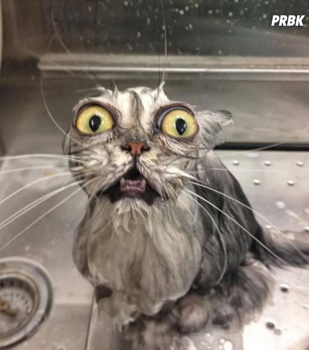 """La photo la plus : """"Comment ça c'était pas de l'eau ?!"""""""