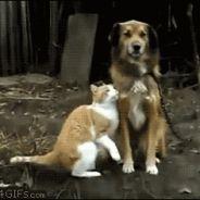 [GIFS] 20 chats qui câlinent tout ce qui bouge