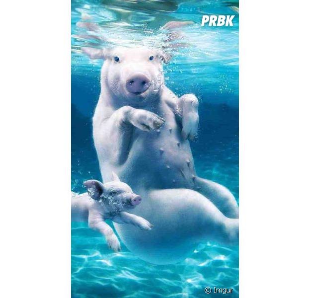 Selfie piggy