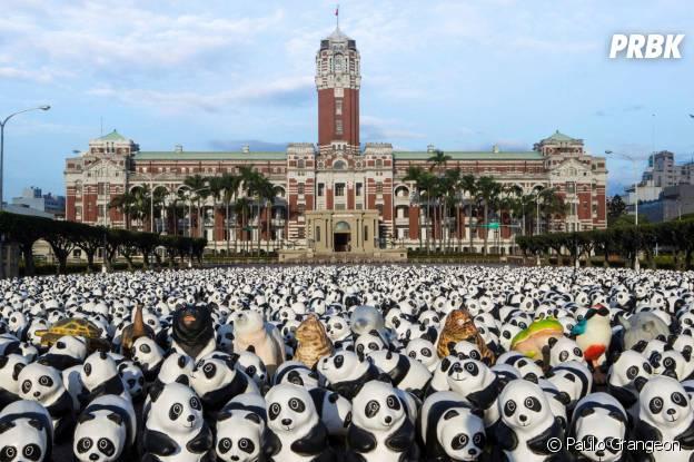 pandas sur une place