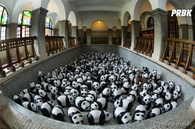 panda fisheye