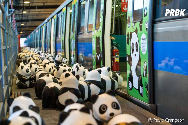 photos des centaines de pandas r unis dans les plus grandes villes du monde purebreak. Black Bedroom Furniture Sets. Home Design Ideas