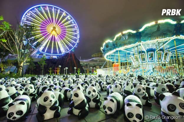 pandas manège