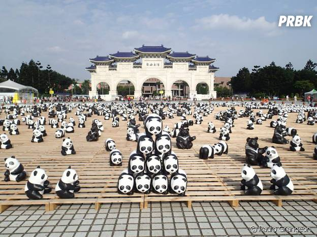 pandas pyramide