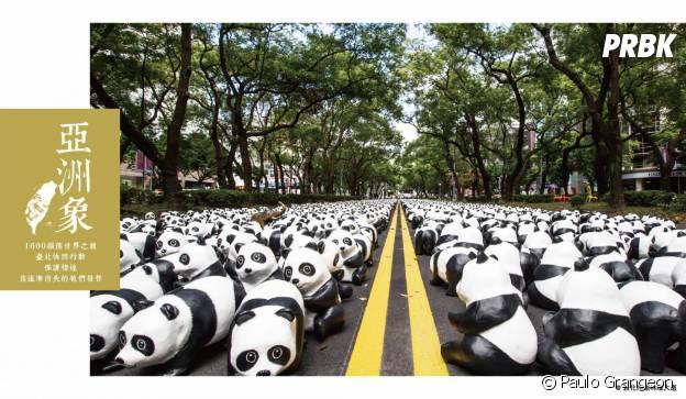 pandas route