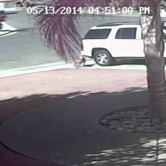 [VIDÉO] Héros du jour : un chat sauve un enfant brutalement attaqué par un chien