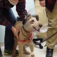 [CUTE] Emotion : un chien aveugle recouvre la vue après une opération