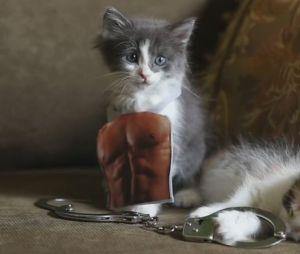 Fifity Shades of Grey : la bande-annonce parodiée avec des chatons