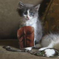 Fifty Shades of Grey : la bande-annonce parodiée.. avec des chatons