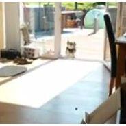 Un chien supplie ses maîtres d'ouvrir une porte... déjà ouverte