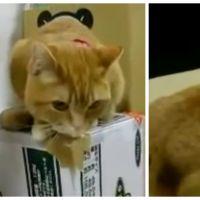 WTF ? Ce chat devient fou dès que ce distributeur de croquettes se met en marche