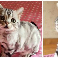 Luhu, le chaton trop mignon mais toujours triste qui fait le buzz. Aussi culte que Grumpy Cat ?