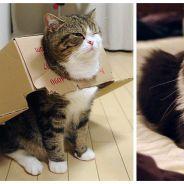 Regarder des vidéos de chats sur Internet est bon pour la santé, c'est prouvé !