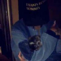 Rihanna sauve et adopte un chiot en pleine soirée en boite de nuit