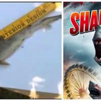 WTF : Sharknado... en vrai ? Des enfants trouvent un requin dans leur jardin !