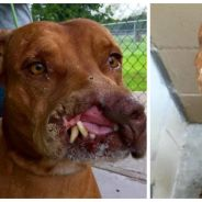 Choquant : une famille abandonne son chien parce qu'il est défiguré. Aujourd'hui, il va mieux...
