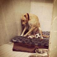 Lana, le chien le plus triste du monde a retrouvé une famille d'accueil grâce au web