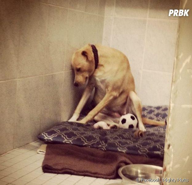 Lana, surnommé le chien le plus triste du monde, avait ému Facebook