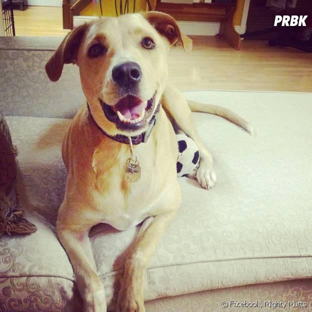 Lana, surnommé le chien le plus triste du monde et qui avait ému Facebook, a retrouvé une famille d'accueil