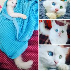 Alos, le chat aux yeux les plus surprenants (et beaux) d'Instagram