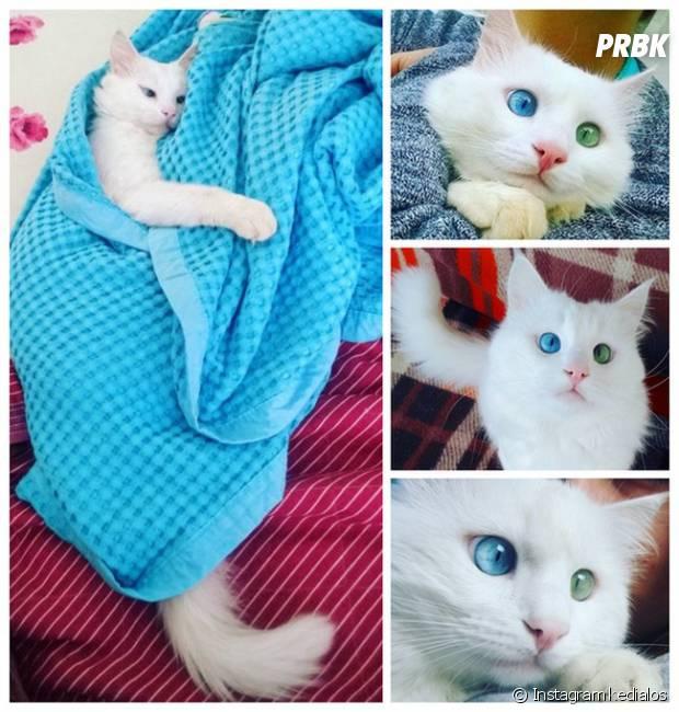 Alos, le chat aux yeux spéciaux qui fait le buzz