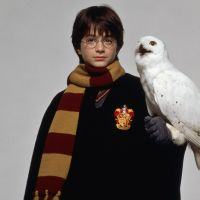 Harry Potter : les hiboux en danger à cause des fans ? J.K. Rowling inquiète