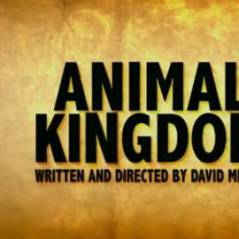 Animal Kingdom ... Regardez la première bande annonce en VO