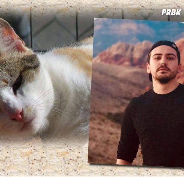 YouTunes et d'autres vidéastes mobilisés pour aider la SPA de Cholet et ses animaux