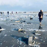 Cette plage se retrouve envahie de jouets Mon Petit Poney après le naufrage d'un navire de transport