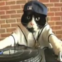 DJ Kitty ... Quand un chat se prend pour David Guetta