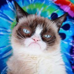 Grumpy Cat est morte : la famille du chat vénère et les internautes sont en deuil