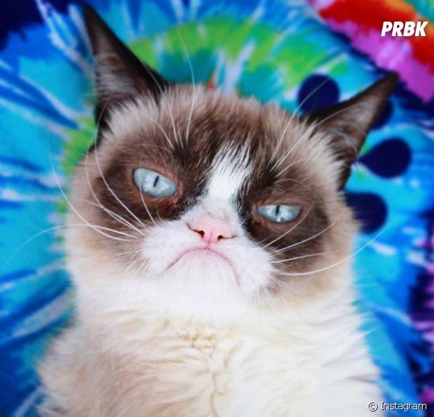 Grumpy Cat est mort : le chat star des réseaux sociaux va nous manquer