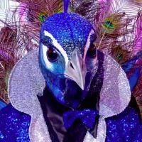 Mask Singer : quelle célébrité est le paon ? Les indices qui dévoilent son identité