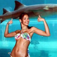 Saint-Tropez : les gendarmes partent à la chasse au requin