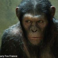 Box-office US : la Planète des singes toujours au top