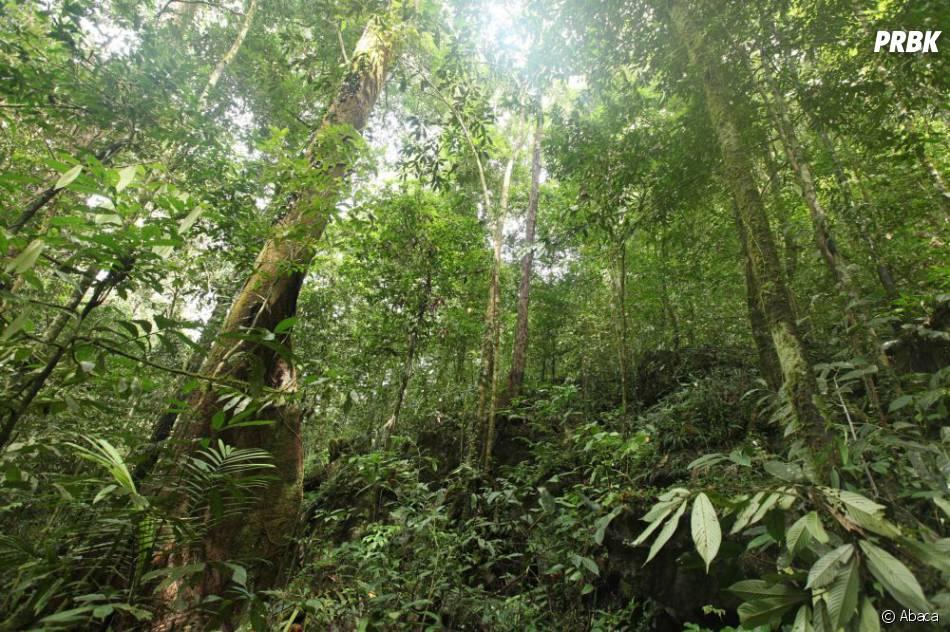 Les candidats de Koh Lanta 12 devront faire face au climat hostile de la jungle malaise !