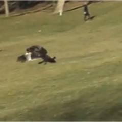 Vidéobuzz : un aigle tente de kidnapper un bébé ? Un fake !