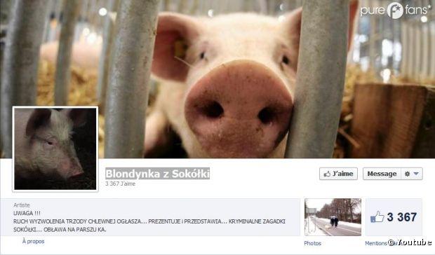 le cochon polonais a droit sa fanpage sur facebook. Black Bedroom Furniture Sets. Home Design Ideas