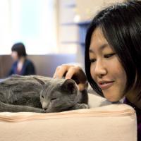 Bar à chats à Paris : appel aux dons, chat'pristi !