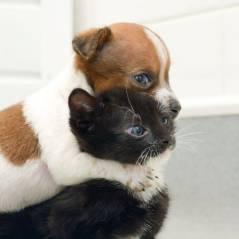 Un chien donne son sang et sauve un chat