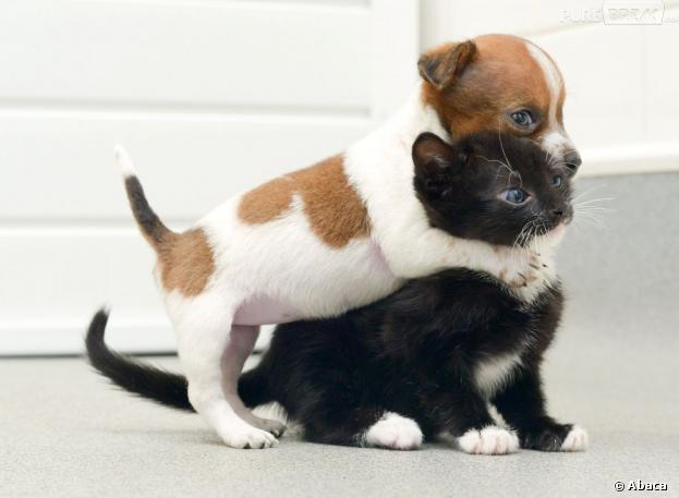 Un chat sauvé par un chien