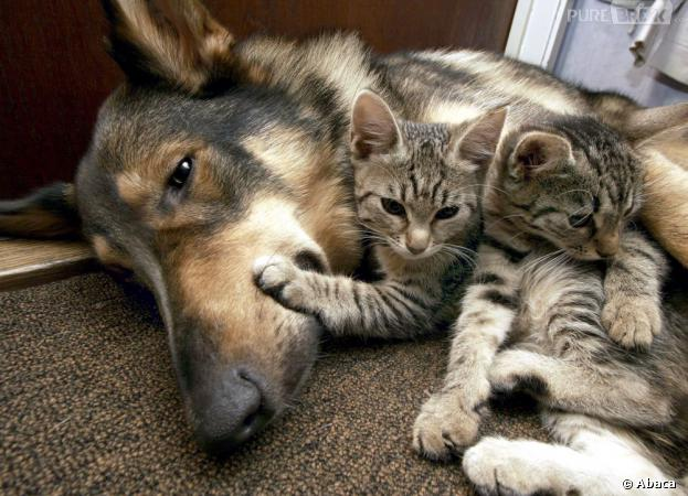 Chiens chats thaliosgulae - Com chien et chat ...