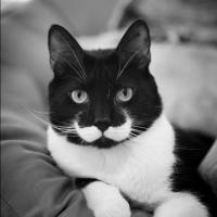 10 animaux classes et dandy qui savent porter la moustache